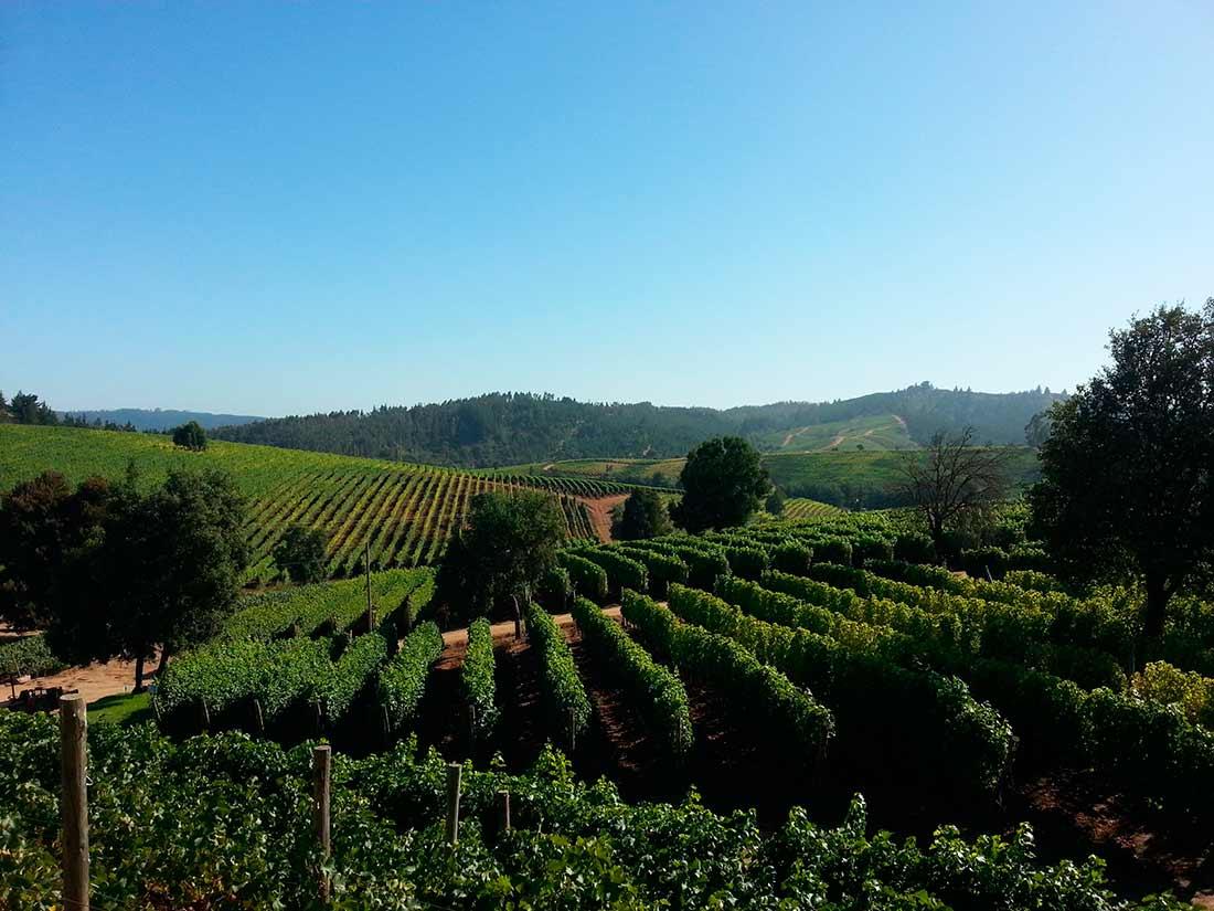 casasilva-wijnkoperij-floractive